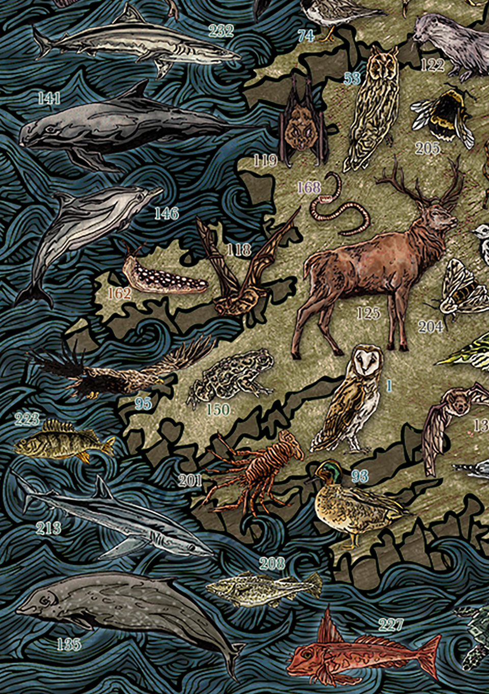 Highly detailed and colourful hand drawn illustrated map of Ireland and Irish wildlife, animals, sea / marine life, fish, birds, insects, mammals, drawn in pen and ink and digitally coloured in Photoshop by Berlin based artist John Rooney
