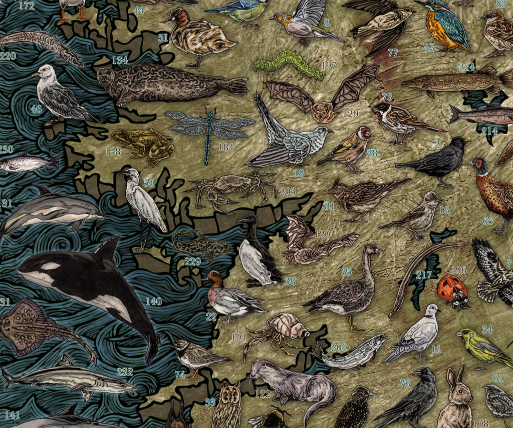 Highly detailed and colourful hand drawn illustrated map of Ireland and Irish wildlife, animals, sea / marine life, fish, birds, insects, mammals, drawn in pen and ink and digitally coloured in Photoshop by Berlin based artist John Rooney. Detail of Mayo Galway Clare Limerick and Kerry
