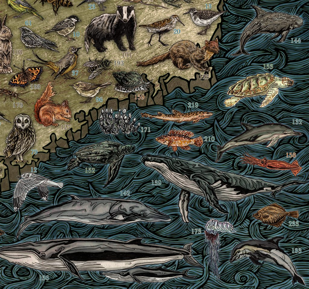 Highly detailed and colourful hand drawn illustrated map of Ireland and Irish wildlife, animals, sea / marine life, fish, birds, insects, mammals, drawn in pen and ink and digitally coloured in Photoshop by Berlin based artist John Rooney. Detail of Wicklow Wexform Carlow and Waterford
