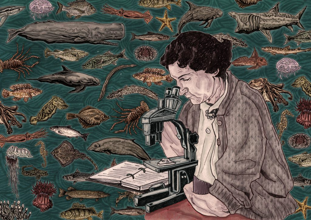 Hand-drawn and detailed colourful illustration of American marine biologist, author, and conservationist Rachel Carson for The Beam Magazine in Berlin, Germany using pen and pencil and then digitally coloured on Photoshop by Irish artist, illustrator & designer John Rooney