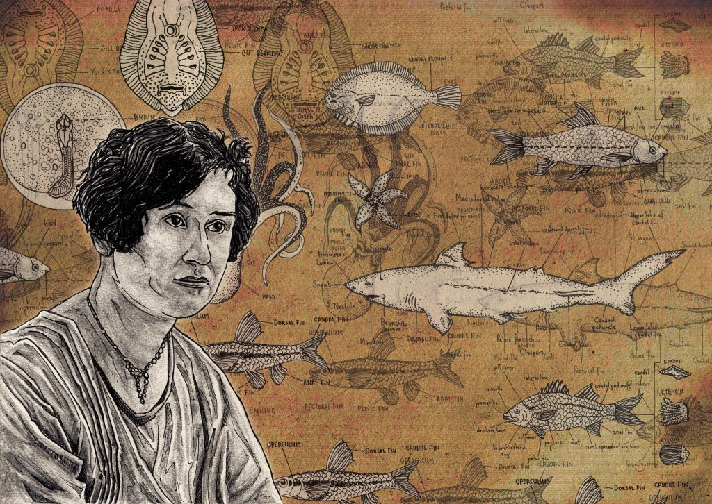 Hand-drawn and detailed colourful illustration of pioneering Canadian ichthyologist and marine biologist Helen Battle for The Beam Magazine in Berlin, Germany using pen and pencil and then digitally coloured on Photoshop by Irish artist, illustrator & designer John Rooney