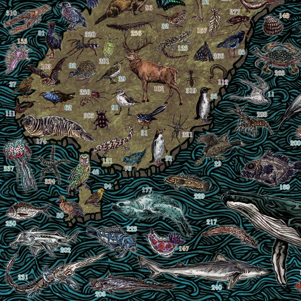 Highly detailed, educational and colourful hand drawn illustrated map of New Zealand and Kiwi wildlife, animals, sea / marine life, fish, birds, insects, mammals, drawn in pen and ink and digitally coloured in Photoshop by Berlin based artist John Rooney.
